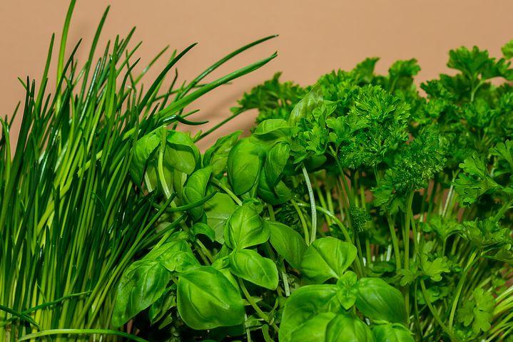Faire pousser des herbes aromatiques