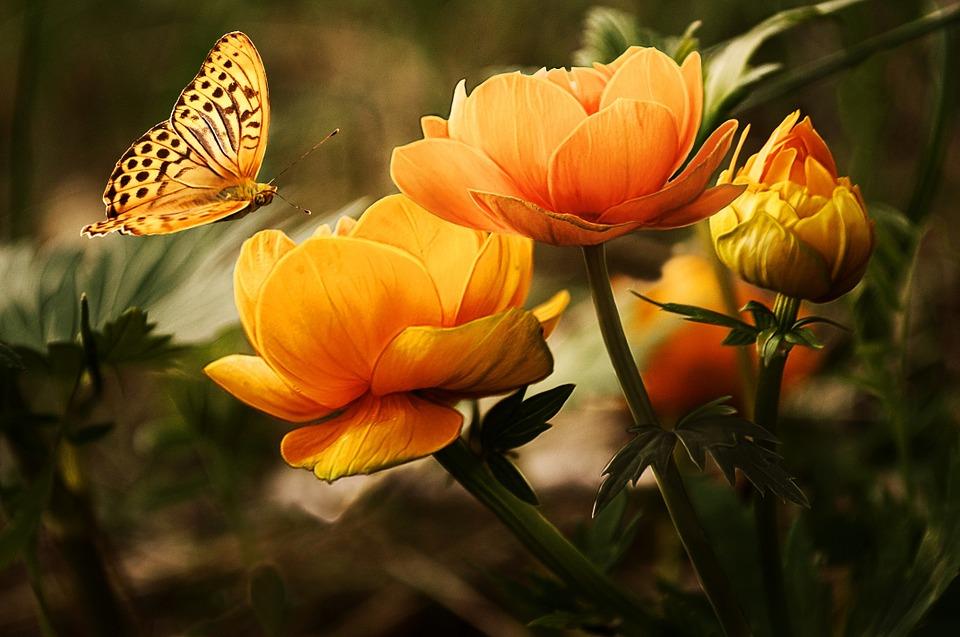 Le savoir-faire du paysagiste pour votre jardin